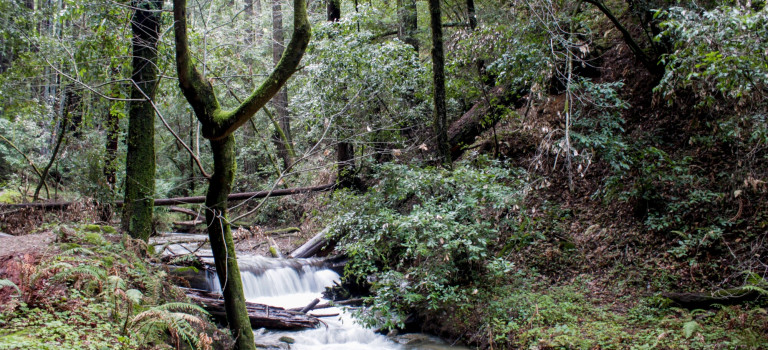 The Top 9 State Parks for RV Owners to Visit in California