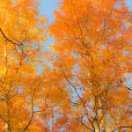 Fall Foliage Near Ventura CA