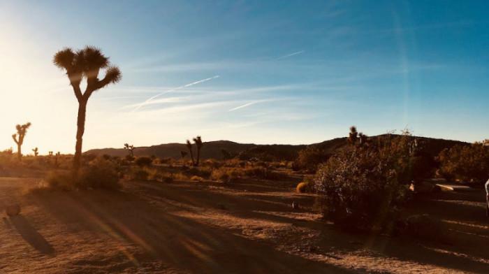 Joshua Tree - National Parks Blue Dog RV