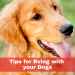 Tips for RVing with Dogs