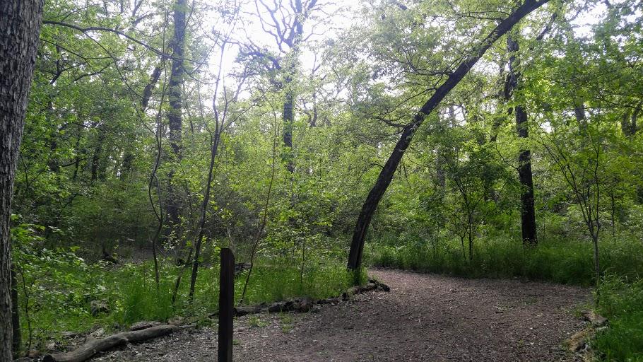 fretz_rv_forest