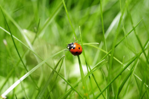 ladybug-796481_1280