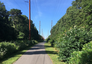 middle-township-bike-path-photo-by-tom-allingham-copy