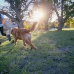 Camping dog running