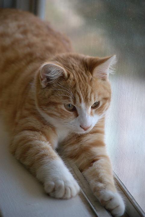 cat-633395_960_720