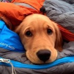 camping with dogs, picture of a cute puppy snuggled up in camping equipment