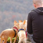 3 tips to make camping with dogs a great time, picture of a man sitting on the top of a hill while hiking with his 2 dogs, camping with dogs
