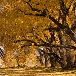enchanted circle of northern new mexico, picture of the fall trees in the taos in the enchanted circle of northern new mexico