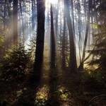 4 awesome ways to connect with nature, beautiful picture of the woods with the sun shining through the trees