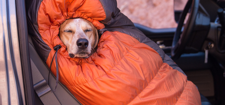 great locations for camping with dogs in oregon, picture of a dog wrapped up in a sleeping bag in the front passenger seat of a truck