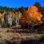 Fall colors are still beautiful in many Southern Utah locations such as Yankee Meadows above Parowan.