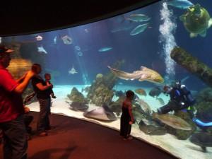 Shark Tank at Albuquerque Bio Park Aquarium