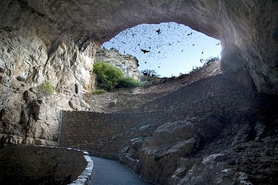 Carlsbad Bat Flight