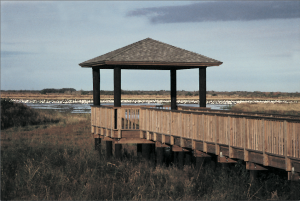 Boardwalk at Cameron Wildlife Center