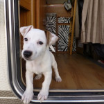 Top 6 Tips When Traveling with a Pet