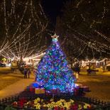 nights-of-lights-plaza-tree