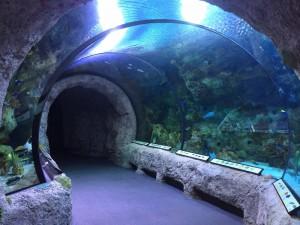 Tunnel in Aquarium