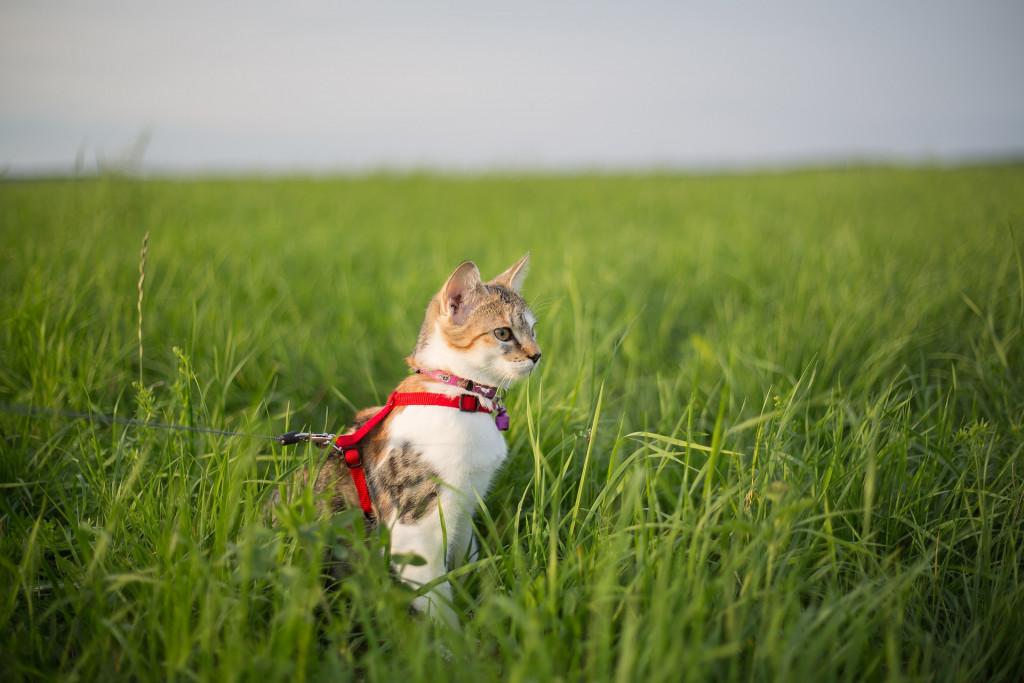 RV Lifestyle Cat Image