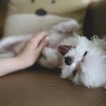 RV Lifestyle Happy Dog Image
