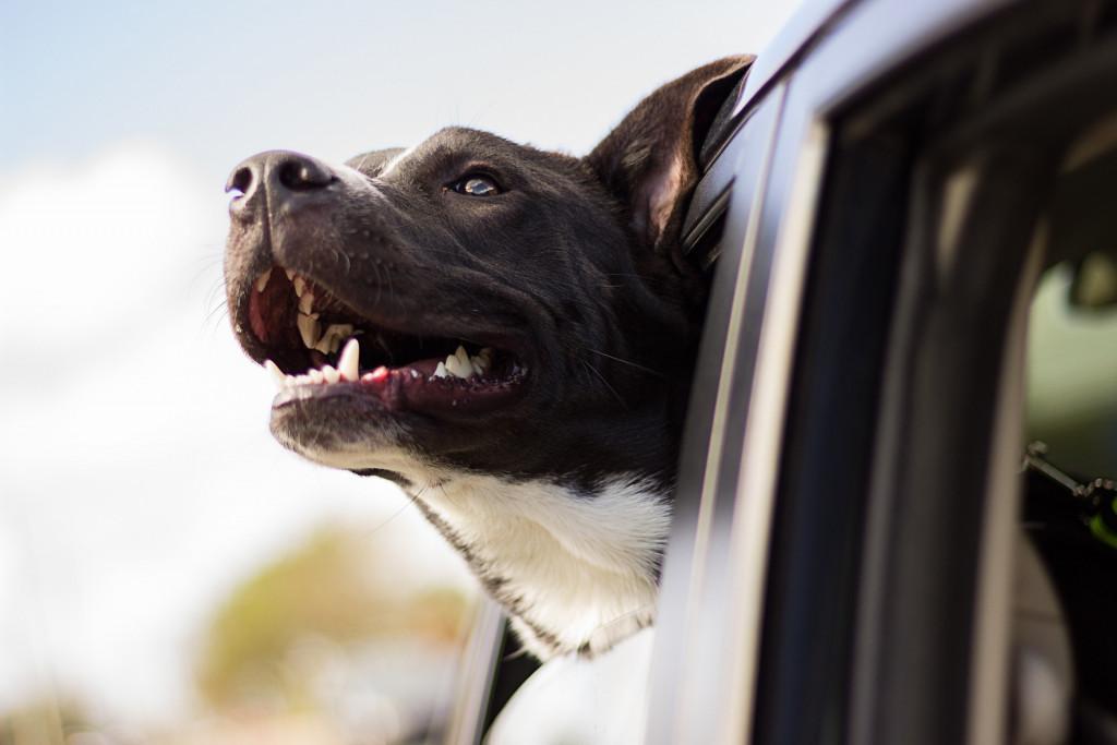 RV Lifestyle Travel Dog
