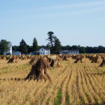 Amish Farm Hay