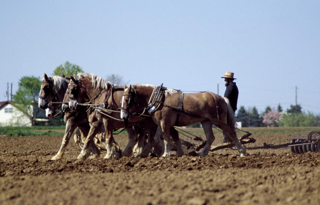 Amish Farmer and Horses