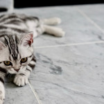 baby cat on tile